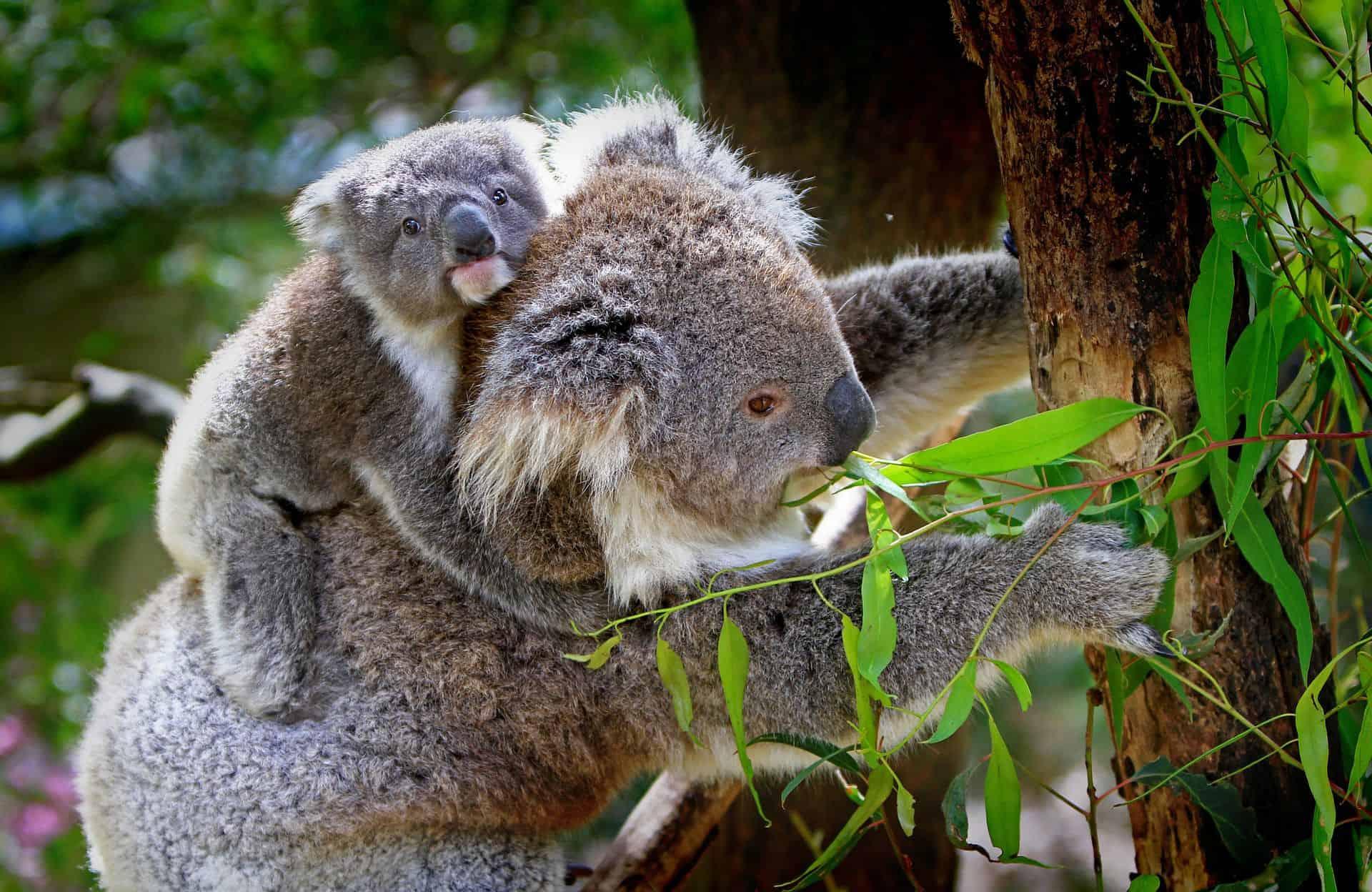 Kelionė į Naująją Zelandiją ir Australiją | Travel Planet